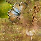 Butterfly & Seed Pods by Lesley Smitheringale