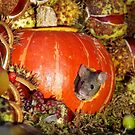 Autumn wild mice with a halloween pumpkin by Simon-dell
