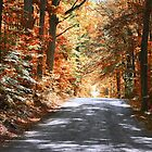 Autumn Pathway ~ Rockville, Indiana ~ United States by Marie Sharp