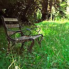 Woodland bench by triciamary