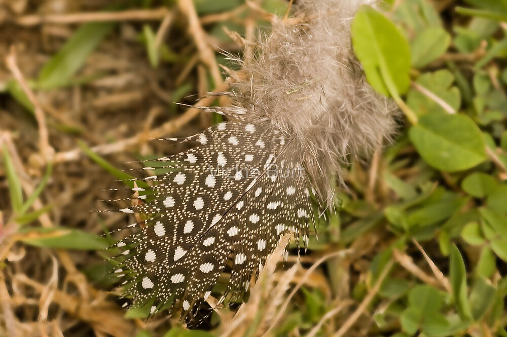 Feather in the grass by Vickie Burt