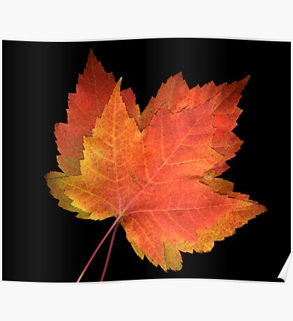 2 FAll leaves #1 Poster