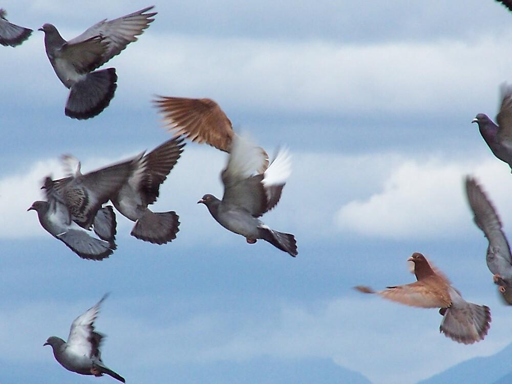 Pigeons in Flight by LOJOHA