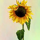 Sunflower With Peakaboo Bangs by Susan Savad