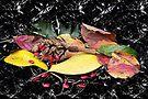 Fall Colors by Terri Chandler
