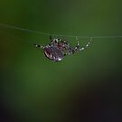Spider in Retreat by toby snelgrove  IPA