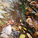 Fall Water by JRobinWhitley