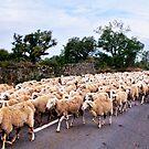 Traffic jam by Andrew Jones