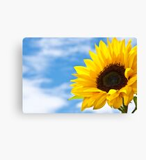 Summers Here Canvas Print