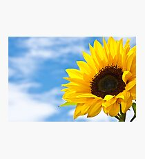 Summers Here Photographic Print