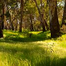 river redgum forest - Murray river by Tony Middleton