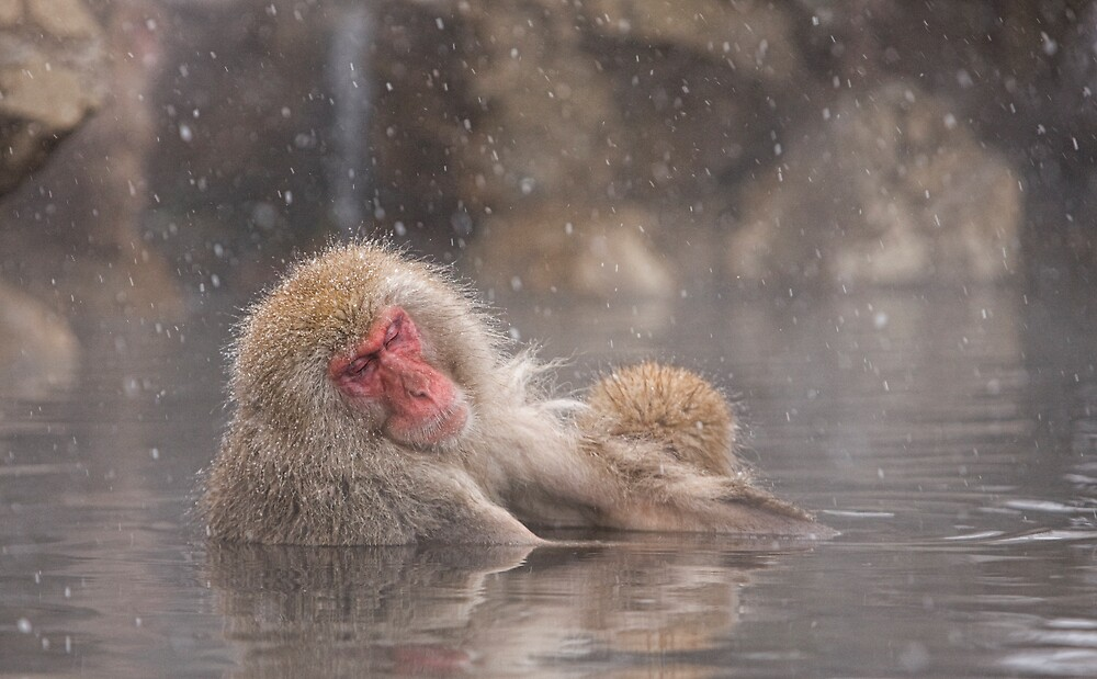 Snow soak by Anne Young