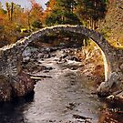 Carrbridge by Rachel Slater