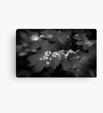 Lensbaby Canvas Print
