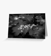 Lensbaby Greeting Card