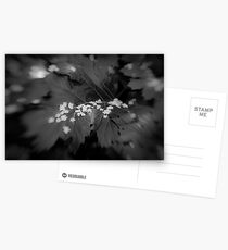 Lensbaby Postcards