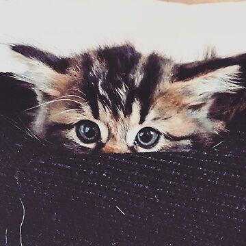 Hiding kitty by Autumn-Winter