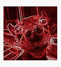 Red Nose Photographic Print