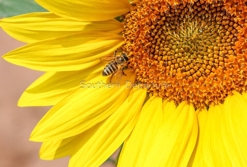 Bee and Sunflower by Southern  Departure
