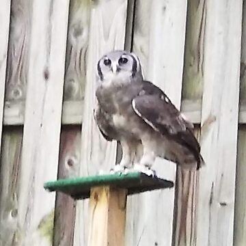 WISE OWL by RETREATINC