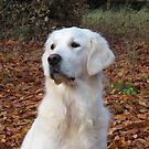 Ditte in the autumn leaves by Trine