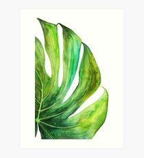 Lámina artística Acuarela de la hoja de Monstera tropical