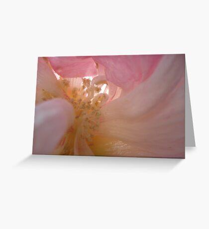 Confederate Rose - Sex 101 Greeting Card