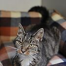 Babs the Cat by AJPPhotography