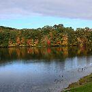 New England Autumn by MDossat