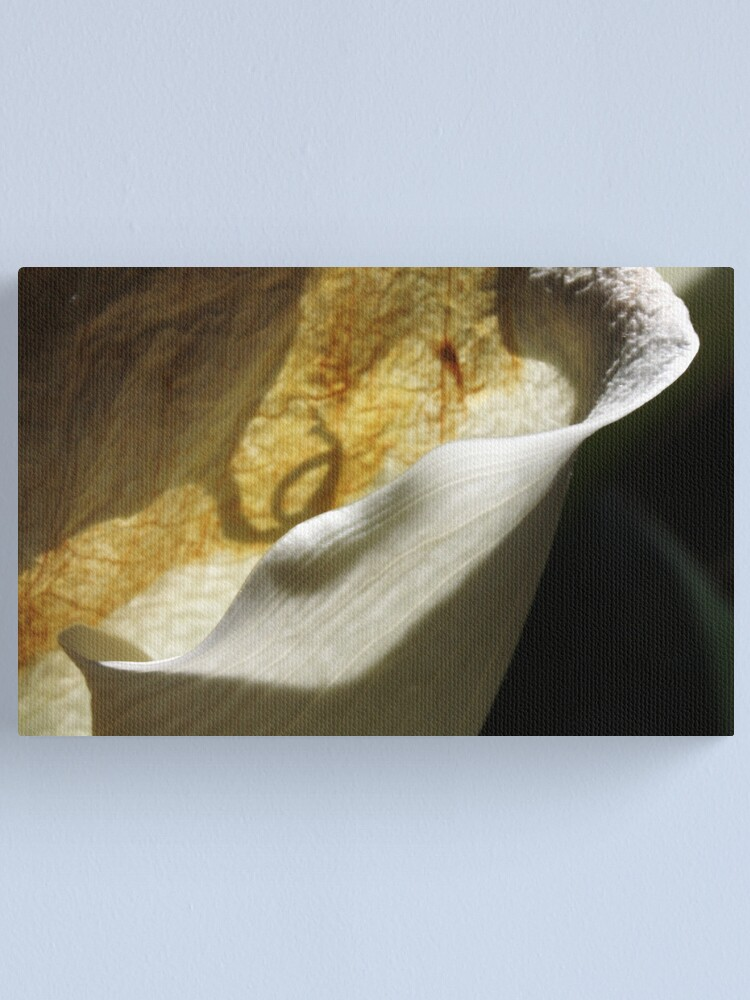 Alternate view of wrinkled beauty Canvas Print