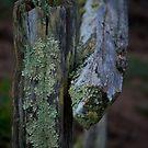 Lichen and Fence Post by Josef Grosch
