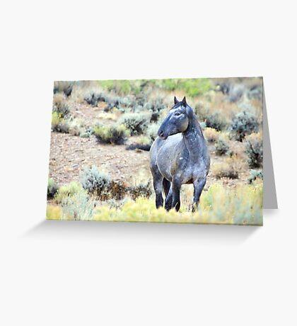 The Watchful Eye - Wild Blue Roan Stallion Greeting Card