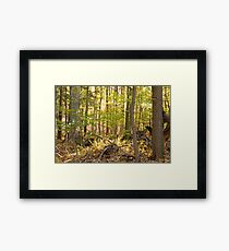 Golden Glade Framed Print