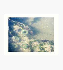 Underwater Sea Anemones Art Print