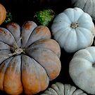 Pumpkins by Colleen Drew