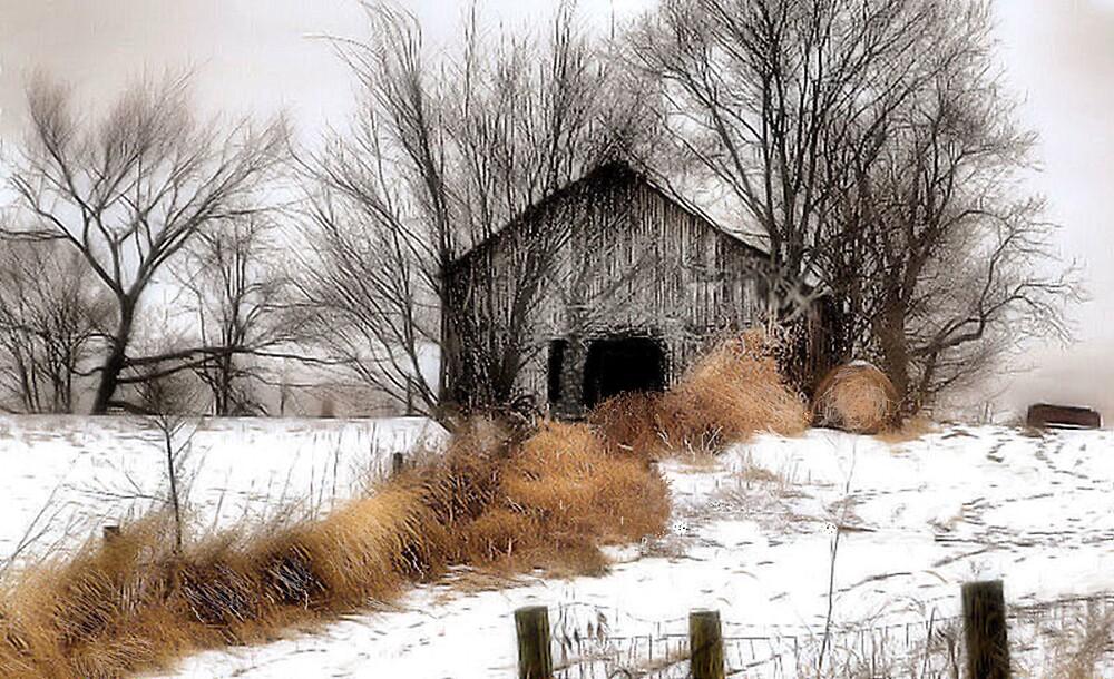 Winter Color by billium