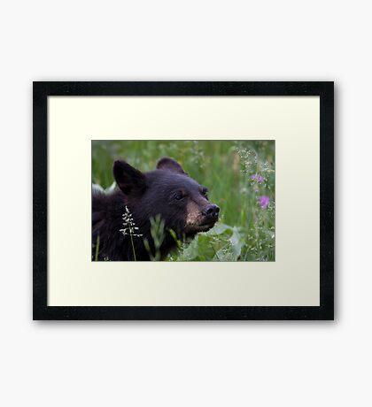Cub Scout Framed Print