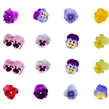 Pansy Mixture by STHogan