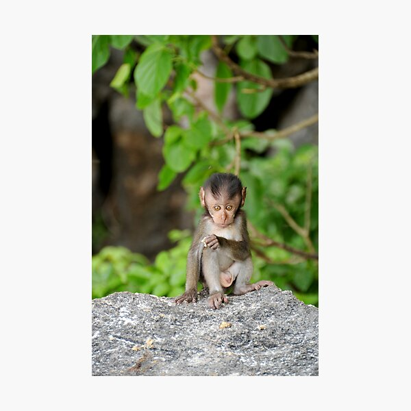 Baby Monkey Photographic Print