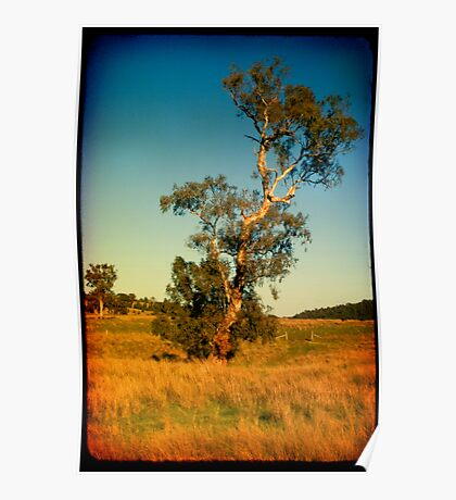 Qurindi Trees Poster