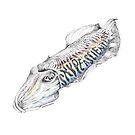 Cuttlefish- Rainbow by SarahMackAttack