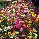 Flower carpet by AmandaWitt