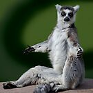 Yoga for Lemurs by Krys Bailey