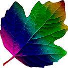 wundervolles, buntes Blatt, Herbst, Baum, Laub, Jahreszeit  von rhnaturestyles
