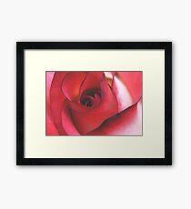 Soft Rose Framed Print