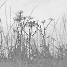 Monochrome grasses by MagsArt