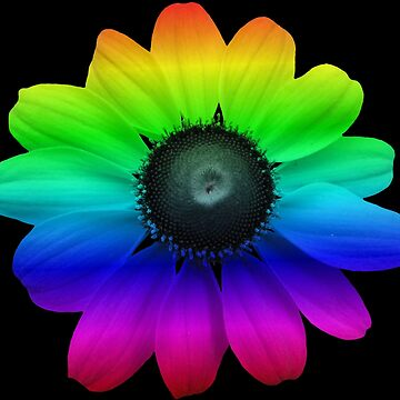 beautiful colorful flower, rainbow, blossom, nature, colorful by rhnaturestyles