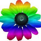 wunderschöne bunte Blume, Regenbogen, Blüte, Natur, bunt von rhnaturestyles