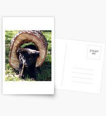 Lieben Logger Postcards