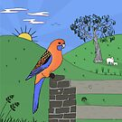 Adelaide Rosella by Rob Price